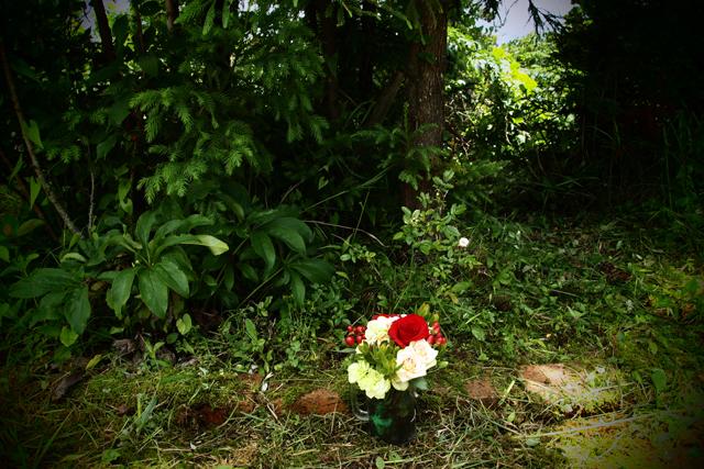 小倉でオーディエンスの方がくれた花を飾りました。そして一輪バラが咲いてた。感激。