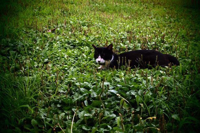 博多の猫太朗。