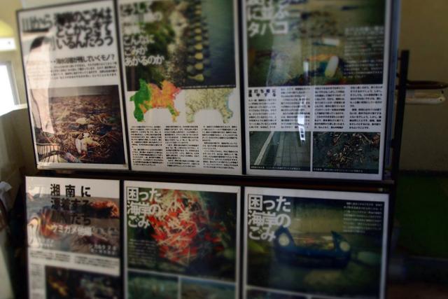 海さくらは江ノ島にタツノオトシゴを戻すために活動しています。
