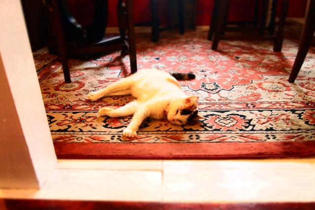 看板猫のくーちゃん。完全に心を持っていかれた。