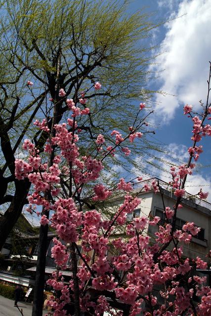 もうすぐ春だよ。