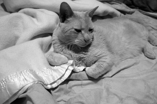 昨日も一緒に寝たなぁ、おまえ。名前覚えられないから、オレがつける。