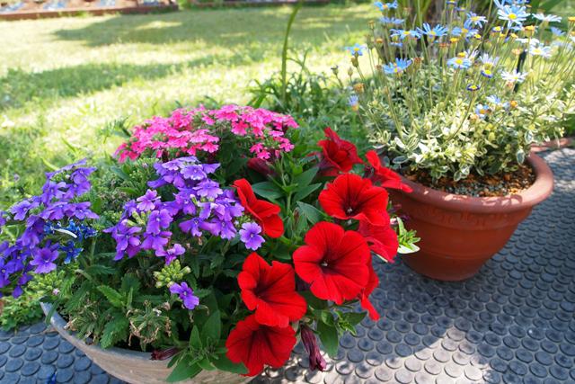 スタジオの庭に花があるってことは、愛があるってことだよ。