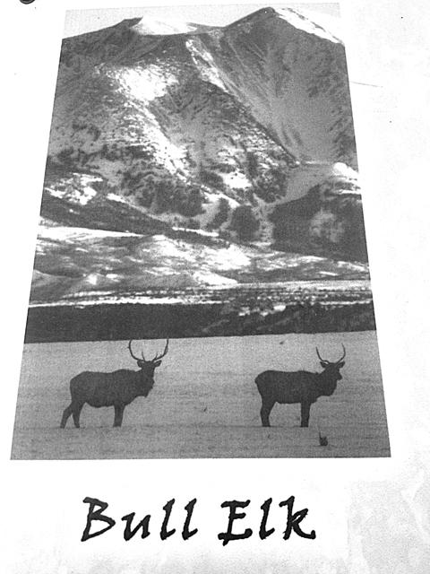 山に居る動物たち。BULL ELKって鹿なのか、牛なのか、その両方なのか?