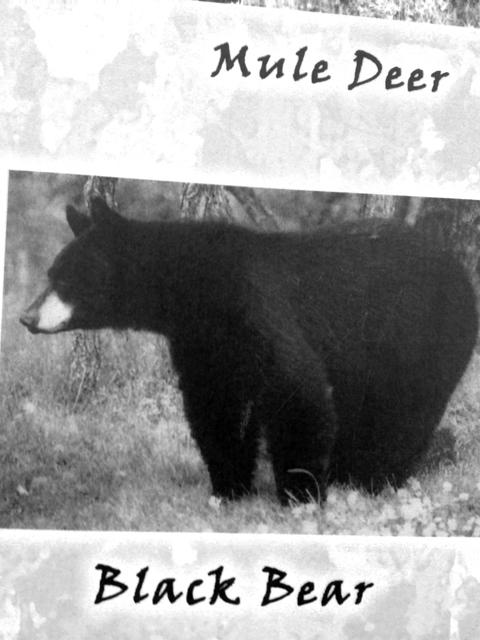熊はたくさん居るみたいだけど、冬眠してるのでもちろん会いません。