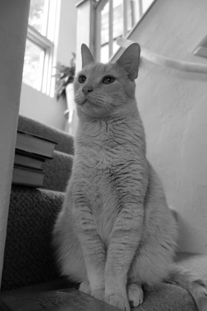 こいつと俺、二匹でいつも留守番。だいぶ、ネコ語話せますよ。