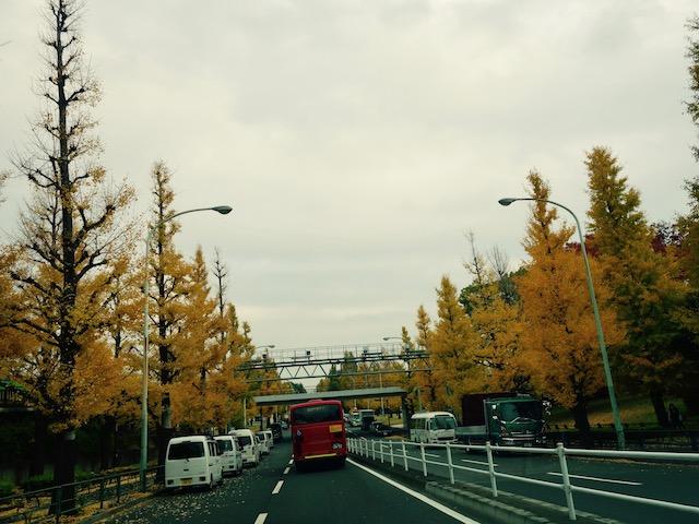 駒沢公園もまっきっき。