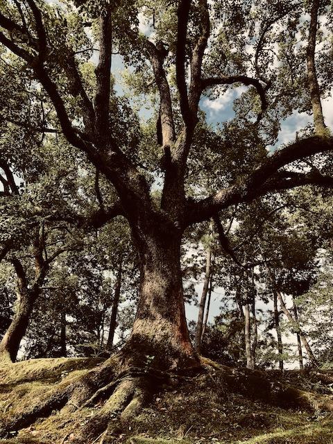 木と話す。
